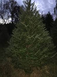 Cedar Ridge Christmas Trees