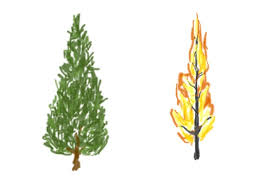 Kinds Of Christmas Trees by Christmas Tree Combustion Science Friday