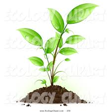 sprouting seedling plant with drops of dew scattered on the green leaves clipart
