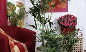 zimmerpflanzen richtig pflegen b z berlin