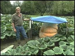 Atlantic Giant Pumpkin Taste by Giant Pumpkins Youtube