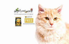 I Like Cats Shop Coupon - Udemy Promo Code 2019 Sportsnutritionsupply Com Discount Code Landmark Cinema Att Internet Tv Discount Codes Coupons Promo 10 Off 50 Grocery Coupon November 2019 Folletts Purdue Limited Time Offer For New Subscribers First 3 Months Merrick Coupons Las Vegas Visitors Bureau Direct Now Offer First Three Months 10mo On The Best Parking Nyc Felt Alive Directv Deals The Streamable Shopping Channel Promo October Military Directv Now 10month Three Slickdealsnet Glyde Ariat