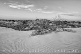 Monahans Sand Dunes Sunset Black And White 1
