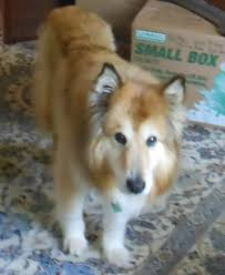 Top 10 Dogs That Dont Shed by Best Dog Breeds That Dont Shed Maconbourgogne