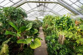 Conservatory at Matthaei Botanical Gardens