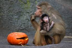 Vienna Halloween Parade 2014 by Oh My Gourd Adorable Zoo Animals Play With Halloween Pumpkins