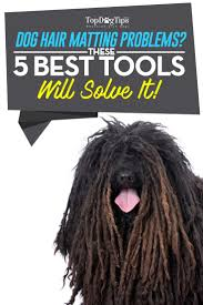 Excessive Hair Shedding In Dogs by Top 5 Best Dog Dematting Tool For Dogs U0027 Hair Tangles In 2017