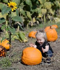 Pumpkin Patches Near Chico California by Photos News Week Of 10 24 2016 Chico Enterprise Record Media Center