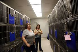 LOIS HENRY: Kern's New Spot For Spaying And Neutering | Columnists ...
