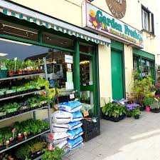 100 Fresh Home And Garden And Lilys Flowers From