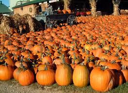 Pumpkin Patch Northwest Arkansas 2015 by Guide To Pumpkin Picking I Love Halloween