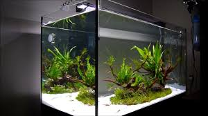 The Island' Aquascape Step By Step - YouTube Aquascape Designs For Your Aquarium Room Fniture Ideas Aquascaping Articles Tutorials Videos The Green Machine Blog Of The Month August 2009 Wakrubau Aquascaping World Planted Tank Contest Design Awards Awesome A Moss Experiment Driftwood Sale Mzanita Pieces Two Gardens By Laszlo Kiss Mini Youtube Warsciowestronytop