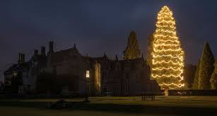 UKs Tallest Christmas Tree At Wakehurst Decorated With 1800 Lights