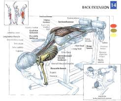 Roman Chair Sit Ups by Why The Roman Chair Hyperextension Exercise Is So Important
