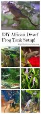 Should African Dwarf Frogs Shed by Best Diy African Dwarf Frog Tank Setup For 2017 Dwarf Frogs
