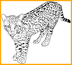 Cat Coloring Pages To Print Inspirationa Fat Printable Animal
