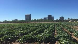 Albuquerque Pumpkin Patch 2015 by Nurseries Take Up Central Phoenix Infill Lot For Pumpkin Patch