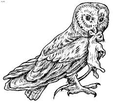 Image Of Barn Owl Coloring Pages