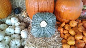 Pumpkin Patch Fresno Ca Hours by Planet Pumpkin Home Facebook