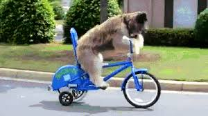 A Dog Riding Bike