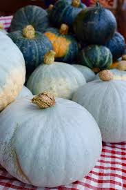 Sprout Pumpkin Seeds Recipe by Winter Squash Pumpkin Recipes And Planting U2013 Seed And Sprout