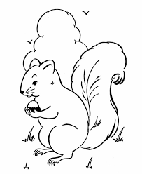 Wild Animal Coloring Page Free Printable Squirrel Pages Featuring Squirrels Gather Nuts