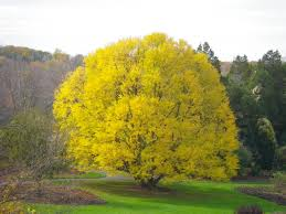 Branch Out With Unusual Varieties Of Trees For Your Yard Best Shade Trees For Oregon Clanagnew Decoration Garden Design With How Do I Choose The Top 10 Faest Growing Gardens Landscaping And Yards Of For Any Backyard Small Trees Plants To Grow Grass In Howtos Diy Shop At Lowescom The Home Depot Of Ideas On Pinterest Fast 12 Great Patio Hgtv Solutions Sails Perth Lawrahetcom A Good Option Providing You Can Plant Eucalyptus Tree