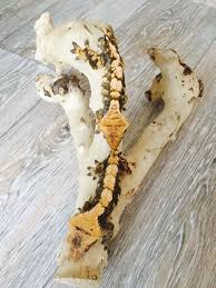 Crested Gecko Shedding Info by Juvenile Male And Female Crested Gecko Peterborough
