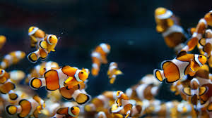 Dragon Ball Z Fish Tank Decorations by Fish Tank Backgrounds Download Wallpaper Wiki