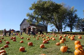 Southern Ohio Pumpkin Patches by 13 Charming Pumpkin Patches Near Washington Dc