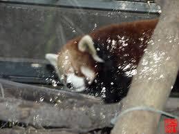 Panda Garden Fairbanks Popular Garden 2017