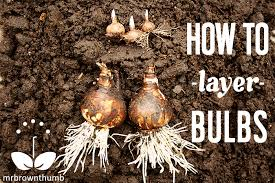 layering flowering garden bulbs mrbrownthumb
