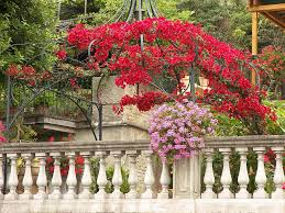 Garden Banisters Flowers - Garden Dress Up A Lantern Candlestick Wreath Banister Wedding Pew 24 Best Railing Decour Images On Pinterest Wedding This Plant Called The Mandivilla Vine Is Beautiful It Fast 27 Stair Decorations Stairs Banisters Flower Box Attractive Exterior Adjustable Best 25 Staircase Decoration Ideas Pin By Lea Sewell For The Home Rainy And Uncategorized Mondu Floral Design Highend Dtown Toronto Banister Balcony Garden Viva Selfwatering Planter 28 Another Easyfirepitscom Diy Gas Fire Pit Cversion That