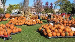 Pumpkin Picking In Ct by Park Ridge Community Church Pumpkin Patch Returns Oct 15 Park
