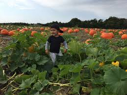 Pumpkin Patch Miami Lakes by 702 Pumpkin Patches And Hello To Fall