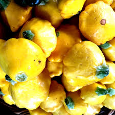 Kernel Toms Pumpkin Patch Moorpark Ca by Baby Yellow Patty Pan Squash Information Recipes And Facts