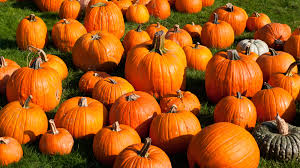 Best Pumpkin Patch Hampton Roads by Get The Best Of Summer And Autumn This Weekend In Toronto