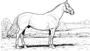Click To See Printable Version Of Stallion Horse Coloring Page