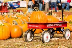Pumpkin Patch Nashville Area by 5 Local Pumpkin Patches And Farms Williamson Source