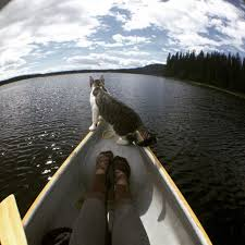 cat on take your cat on an excellent adventure mnn nature network