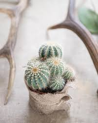 Best Plant For Bathroom Feng Shui by According To Feng Shui Principles The Best Place For Cactus Plants
