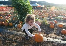 Pumpkin Patch Irvine University by Here Are The Best Photos At Orange County Pumpkin Patches In 2016