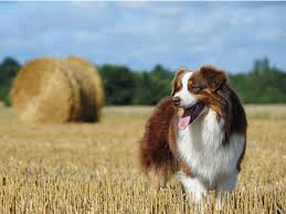 Shed Free Dogs Pictures by 10 Healthiest Dog Breeds Petmd