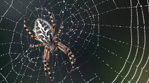 l araignée de jardin un entrepreneur à faire réfléchir