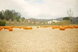 Pumpkin Patch Farm Temecula by 12 Peltzer Pumpkin Patch Temecula Funhouse Escape