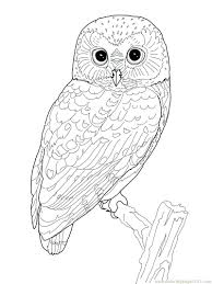 Coloring Book Pictures Of Owls Colorama Owl Printable Page Pages Birds Free Animal Kingdom