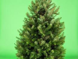Balsam Christmas Trees by Fresh Vs Fake Christmas Tree Choosing The Right One For You Sunset