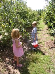 Pumpkin Picking Richmond by Completely Kids Richmond Pick Your Own Apples Pumpkins