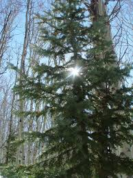 Colorado Blm Christmas Tree Permits by Segments From The Backcountry Radio Network Backcountry Utah