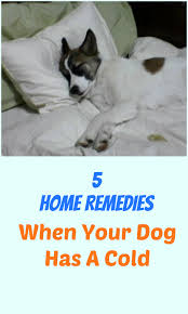 cat runny nose 5 home remedies for when your has a cold petslady